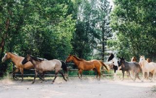 Cherokee Park Ranch - Horses Running