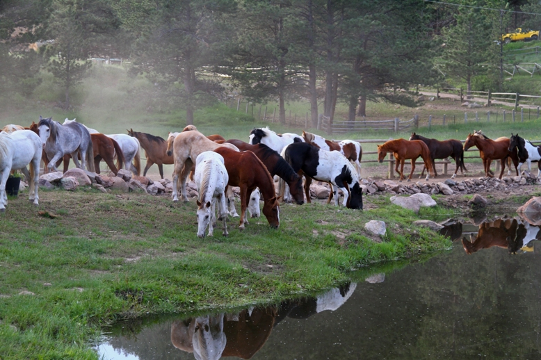 Dude Ranch Vacation Tips from our Head Wrangler - Cherokee