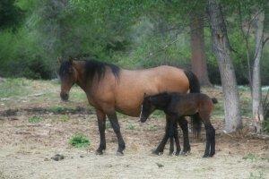 Colorado Mustang